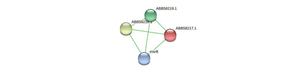 ABB58217.1 protein (Synechococcus elongatus PCC7942) - STRING interaction network