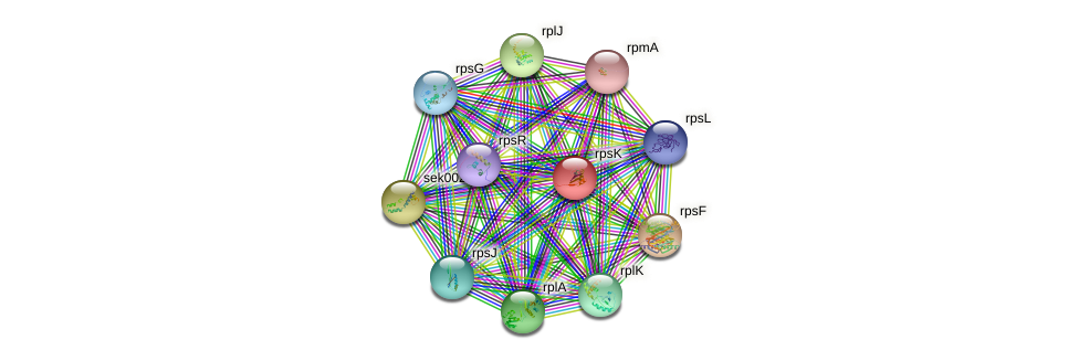 rpsK protein (Synechococcus elongatus PCC7942) - STRING interaction network