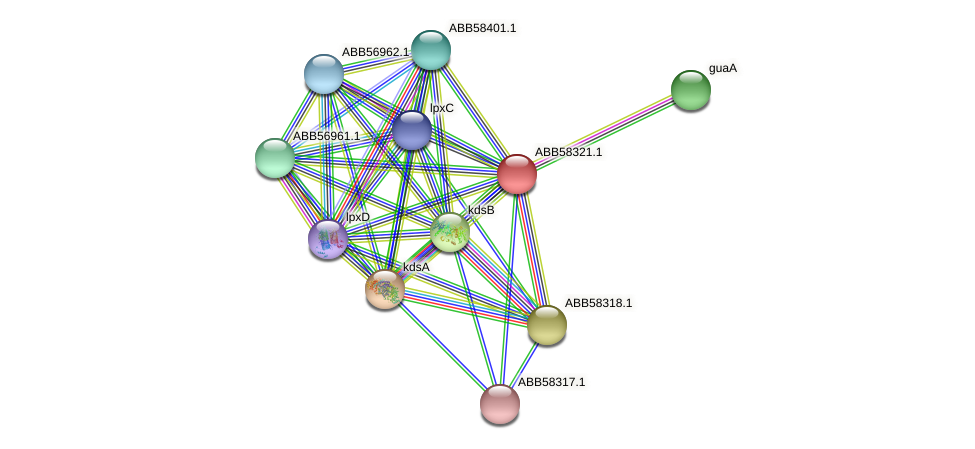 ABB58321.1 protein (Synechococcus elongatus PCC7942) - STRING interaction network