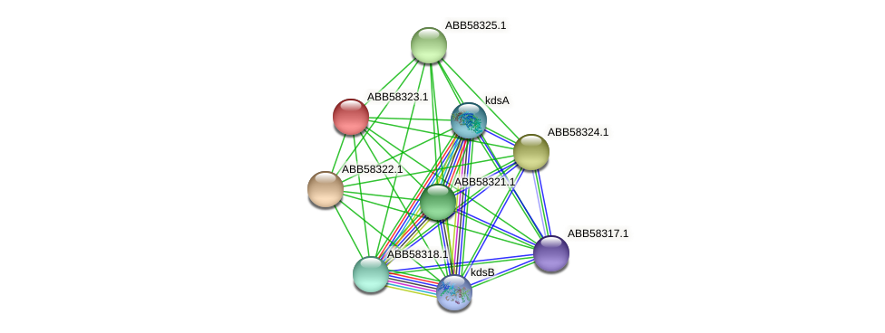 ABB58323.1 protein (Synechococcus elongatus PCC7942) - STRING interaction network