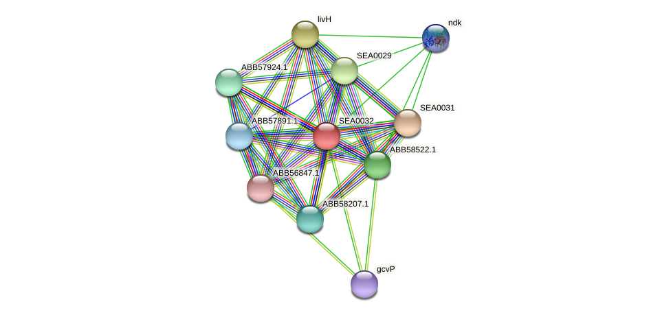 SEA0032 protein (Synechococcus elongatus PCC7942) - STRING interaction network