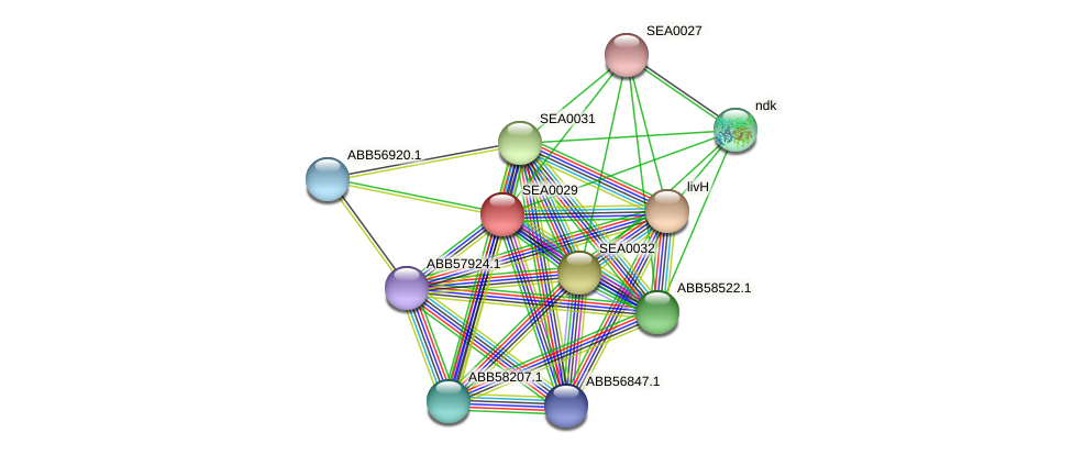 SEA0029 protein (Synechococcus elongatus PCC7942) - STRING interaction network