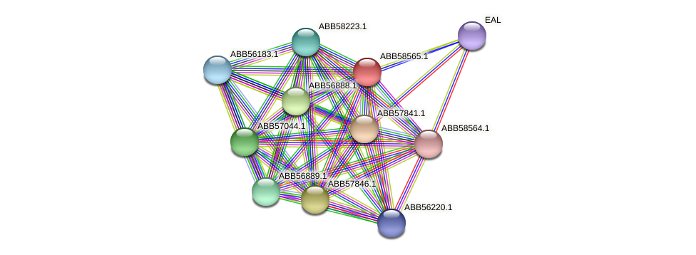 ABB58565.1 protein (Synechococcus elongatus PCC7942) - STRING interaction network