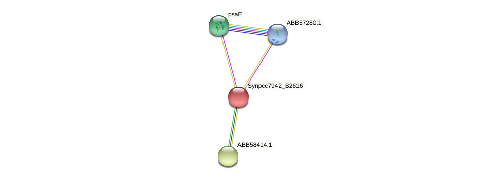 anL42 protein (Synechococcus elongatus PCC7942) - STRING interaction network