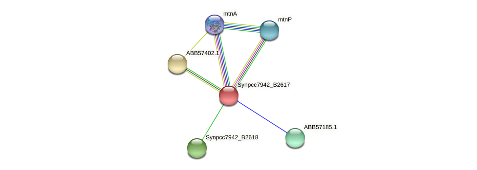 anL43 protein (Synechococcus elongatus PCC7942) - STRING interaction network