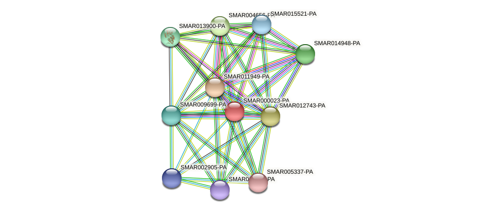 SMAR000023-PA protein (Strigamia maritima) - STRING interaction network