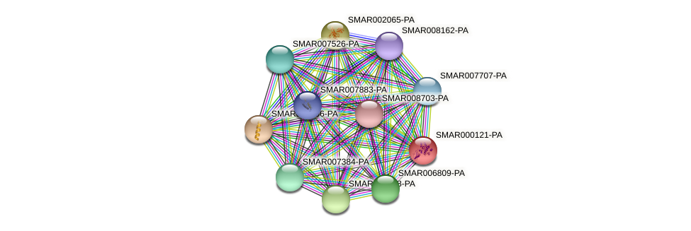 SMAR000121-PA protein (Strigamia maritima) - STRING interaction network