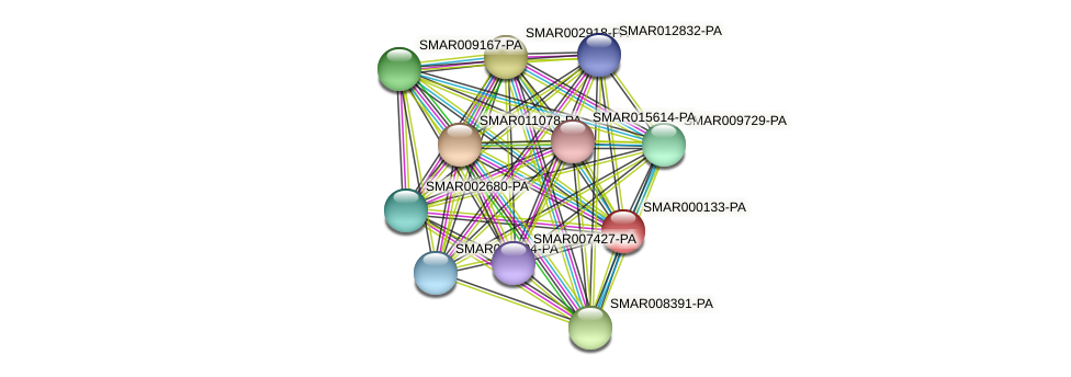 SMAR000133-PA protein (Strigamia maritima) - STRING interaction network