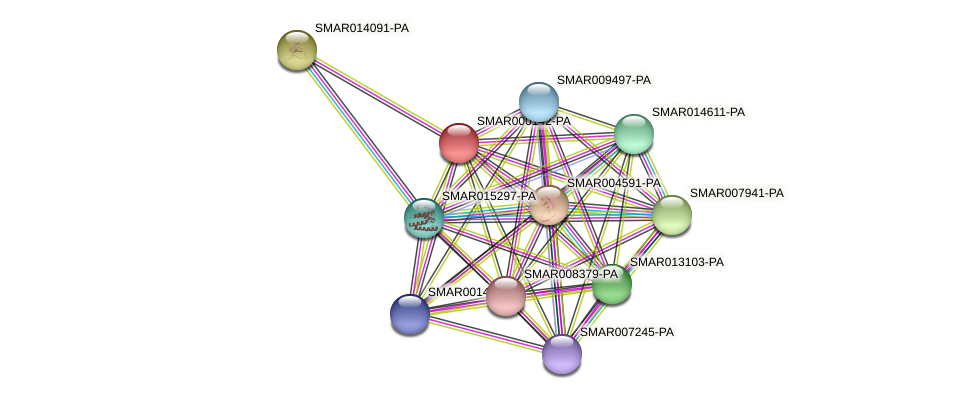 SMAR000142-PA protein (Strigamia maritima) - STRING interaction network