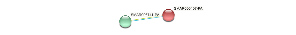 SMAR000407-PA protein (Strigamia maritima) - STRING interaction network
