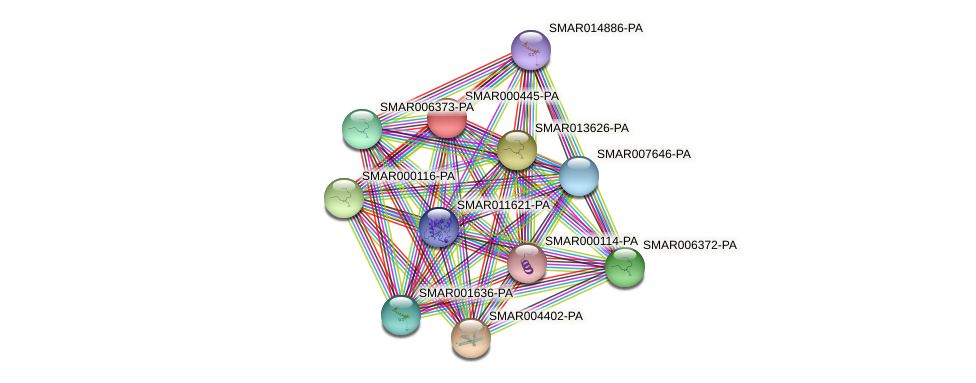 SMAR000445-PA protein (Strigamia maritima) - STRING interaction network