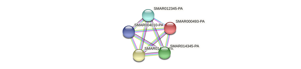 SMAR000493-PA protein (Strigamia maritima) - STRING interaction network