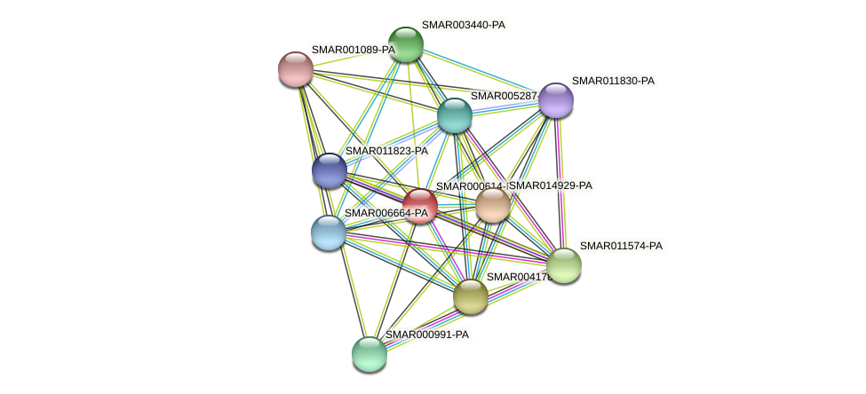 SMAR000614-PA protein (Strigamia maritima) - STRING interaction network