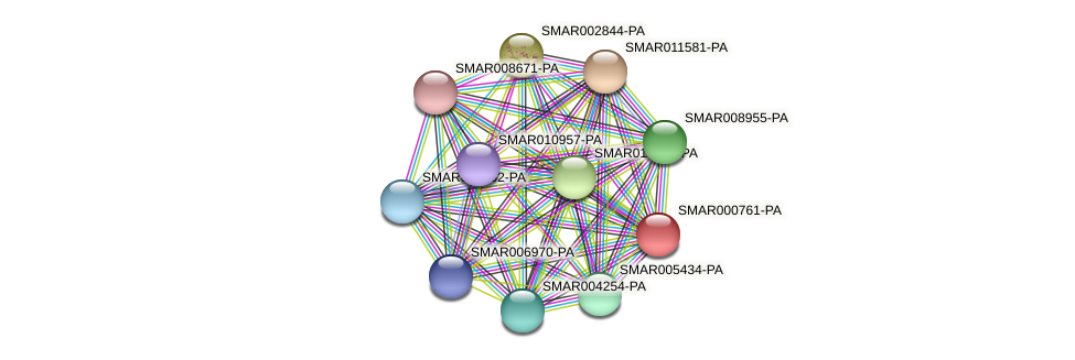 SMAR000761-PA protein (Strigamia maritima) - STRING interaction network