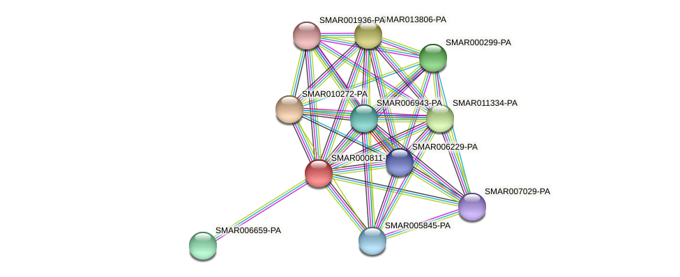 SMAR000811-PA protein (Strigamia maritima) - STRING interaction network