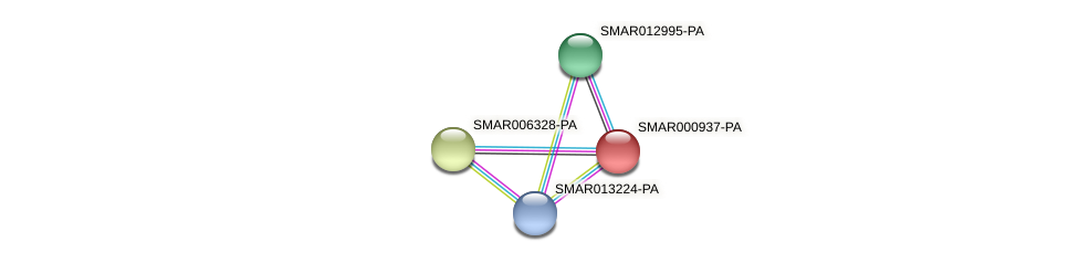 SMAR000937-PA protein (Strigamia maritima) - STRING interaction network