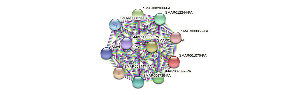 SMAR001070-PA protein (Strigamia maritima) - STRING interaction network