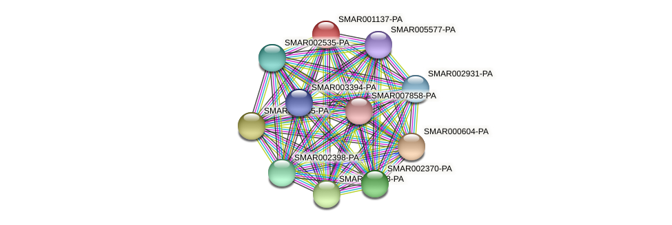 SMAR001137-PA protein (Strigamia maritima) - STRING interaction network