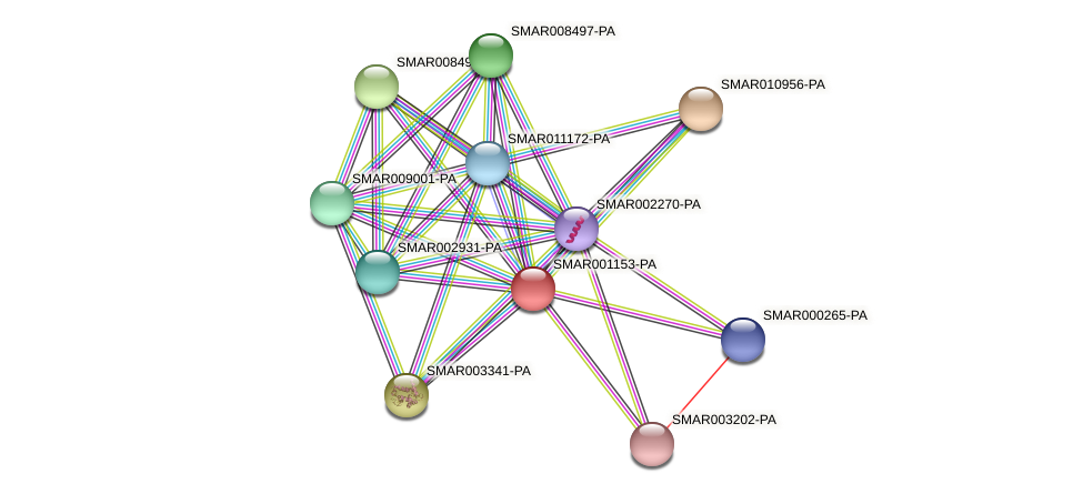 SMAR001153-PA protein (Strigamia maritima) - STRING interaction network
