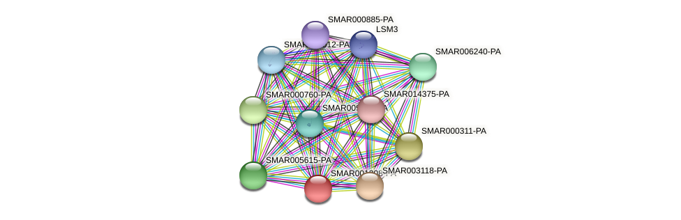 SMAR001208-PA protein (Strigamia maritima) - STRING interaction network