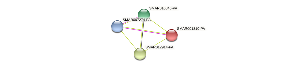 SMAR001310-PA protein (Strigamia maritima) - STRING interaction network