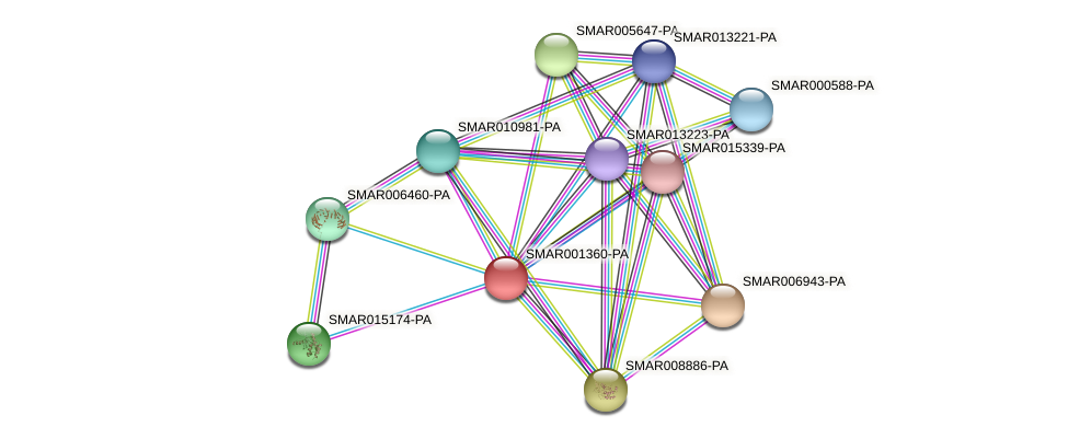 SMAR001360-PA protein (Strigamia maritima) - STRING interaction network