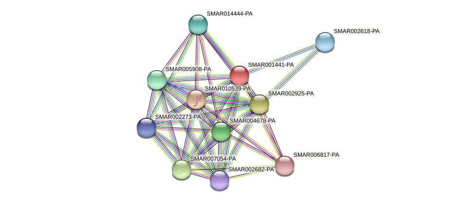 SMAR001441-PA protein (Strigamia maritima) - STRING interaction network
