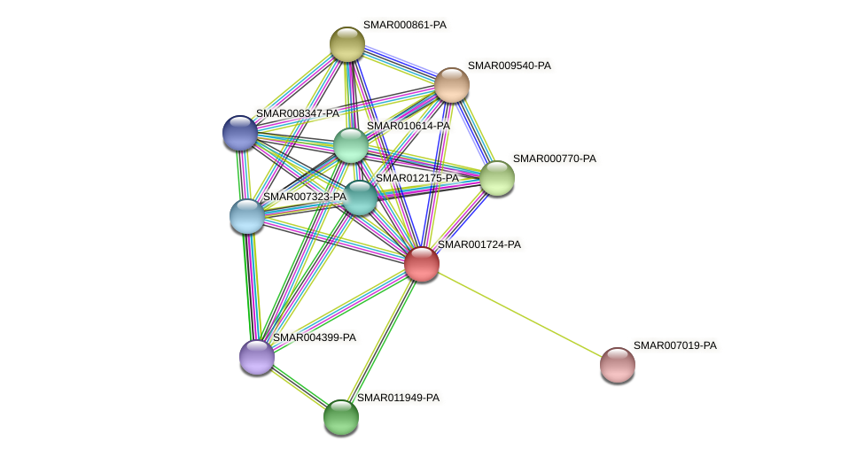 SMAR001724-PA protein (Strigamia maritima) - STRING interaction network