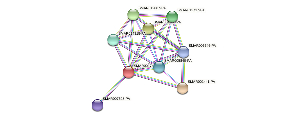 SMAR001743-PA protein (Strigamia maritima) - STRING interaction network