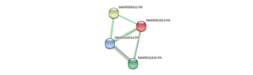 SMAR001813-PA protein (Strigamia maritima) - STRING interaction network