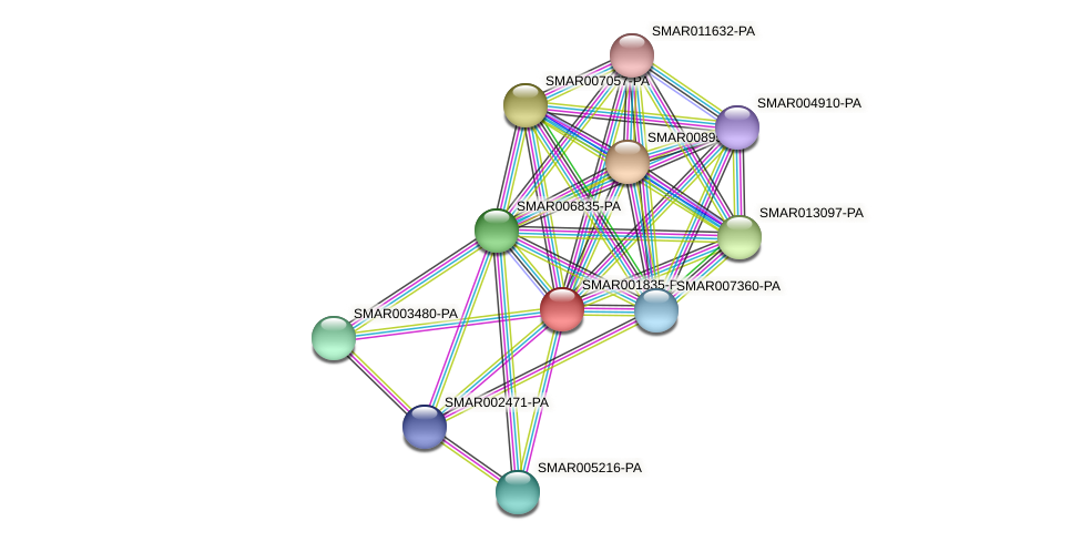SMAR001835-PA protein (Strigamia maritima) - STRING interaction network