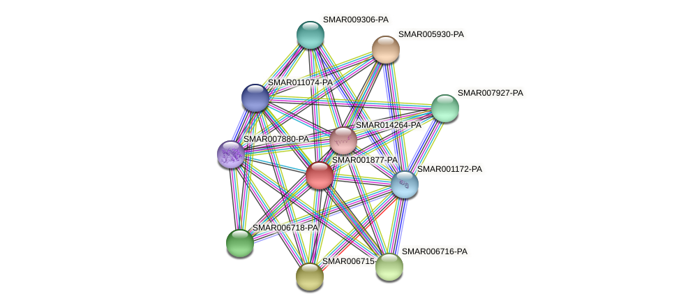 SMAR001877-PA protein (Strigamia maritima) - STRING interaction network