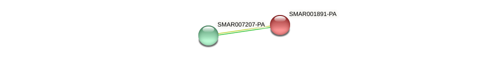 SMAR001891-PA protein (Strigamia maritima) - STRING interaction network