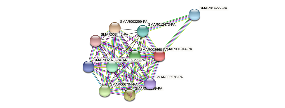 SMAR001914-PA protein (Strigamia maritima) - STRING interaction network