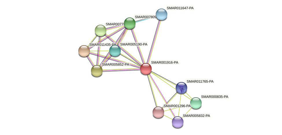 SMAR001916-PA protein (Strigamia maritima) - STRING interaction network