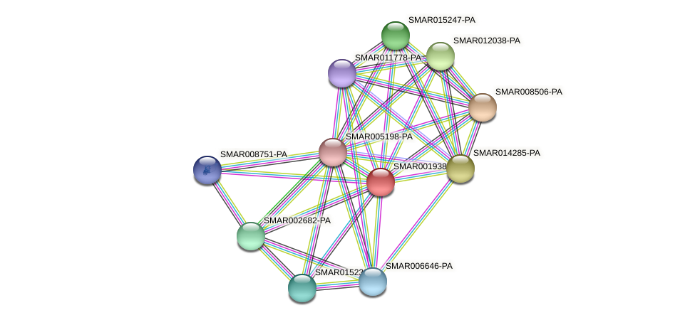 SMAR001938-PA protein (Strigamia maritima) - STRING interaction network