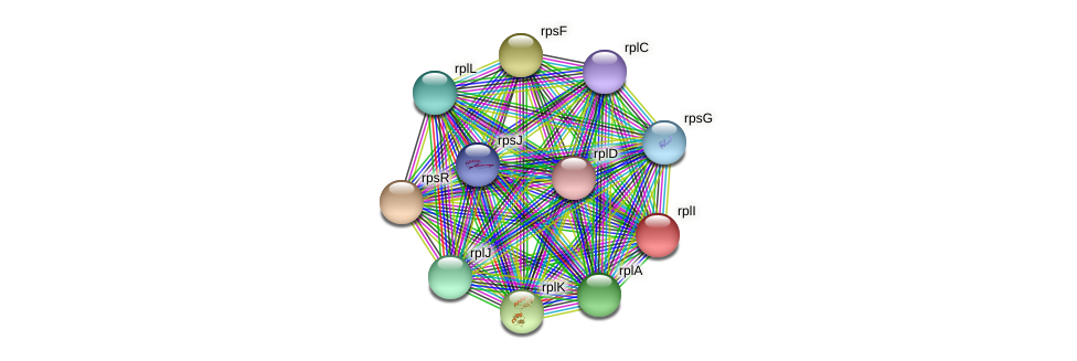 rplI protein (Dermacoccus nishinomiyaensis) - STRING interaction network