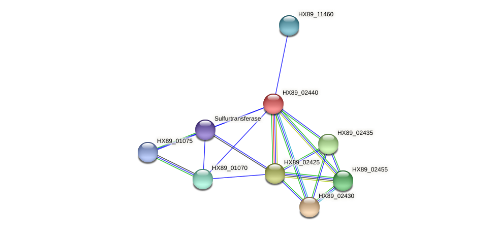 HX89_02440 protein (Dermacoccus nishinomiyaensis) - STRING interaction network