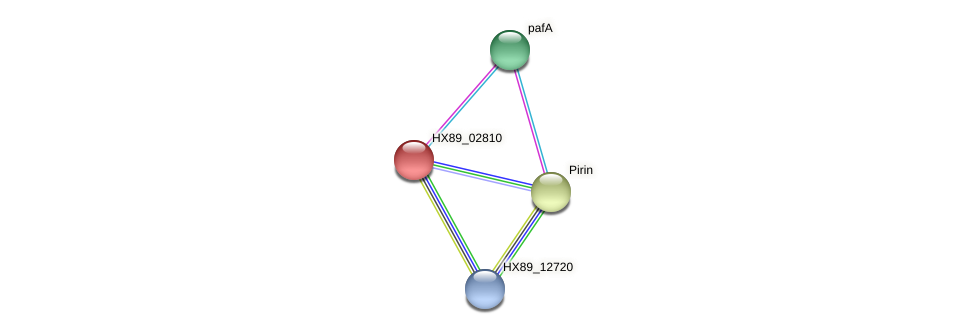 HX89_02810 protein (Dermacoccus nishinomiyaensis) - STRING interaction network