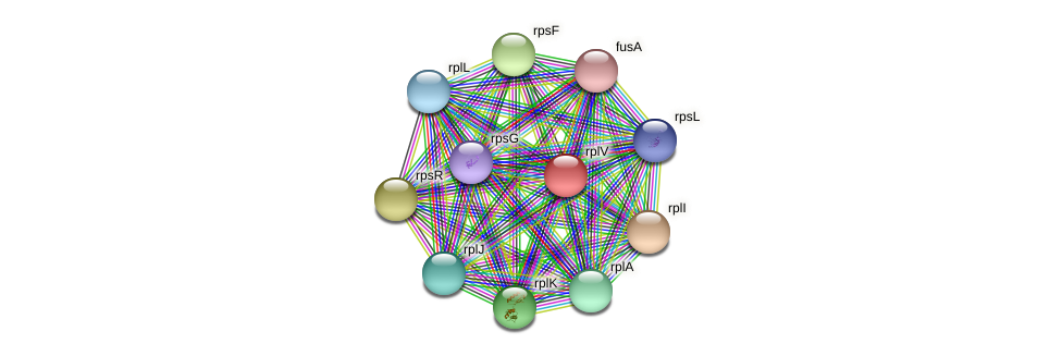 rplV protein (Dermacoccus nishinomiyaensis) - STRING interaction network