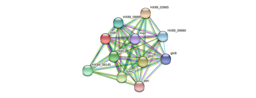 mdh protein (Dermacoccus nishinomiyaensis) - STRING interaction network