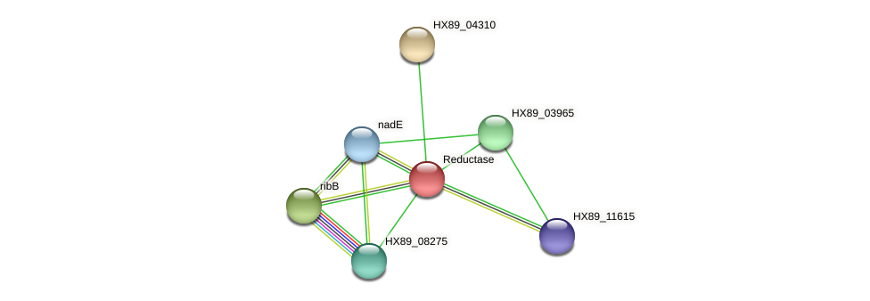 HX89_04305 protein (Dermacoccus nishinomiyaensis) - STRING interaction network