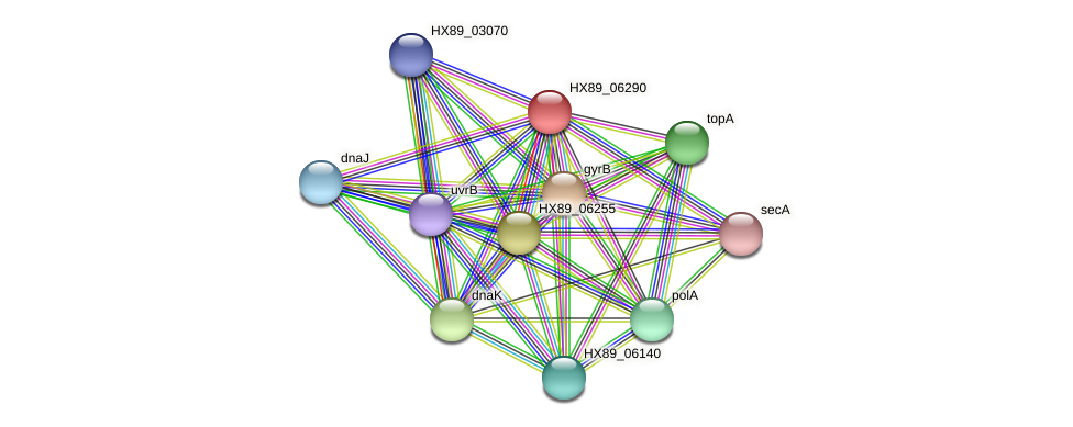 HX89_06290 protein (Dermacoccus nishinomiyaensis) - STRING interaction network