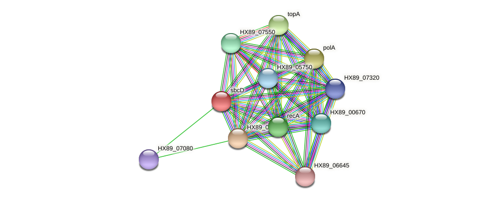 sbcD protein (Dermacoccus nishinomiyaensis) - STRING interaction network