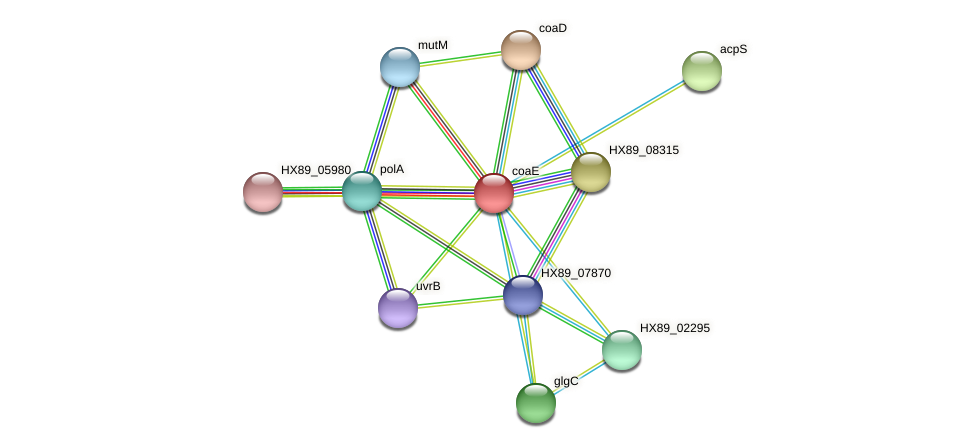 HX89_07865 protein (Dermacoccus nishinomiyaensis) - STRING interaction network