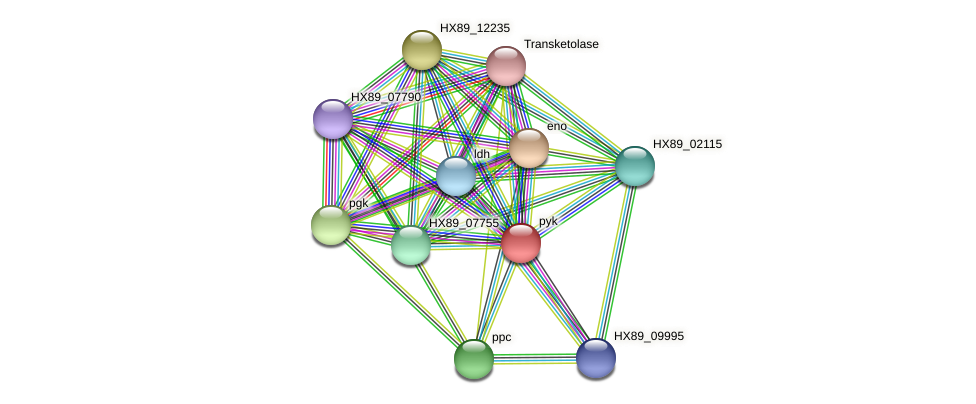 HX89_08135 protein (Dermacoccus nishinomiyaensis) - STRING interaction network