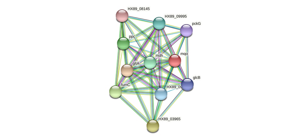mqo protein (Dermacoccus nishinomiyaensis) - STRING interaction network