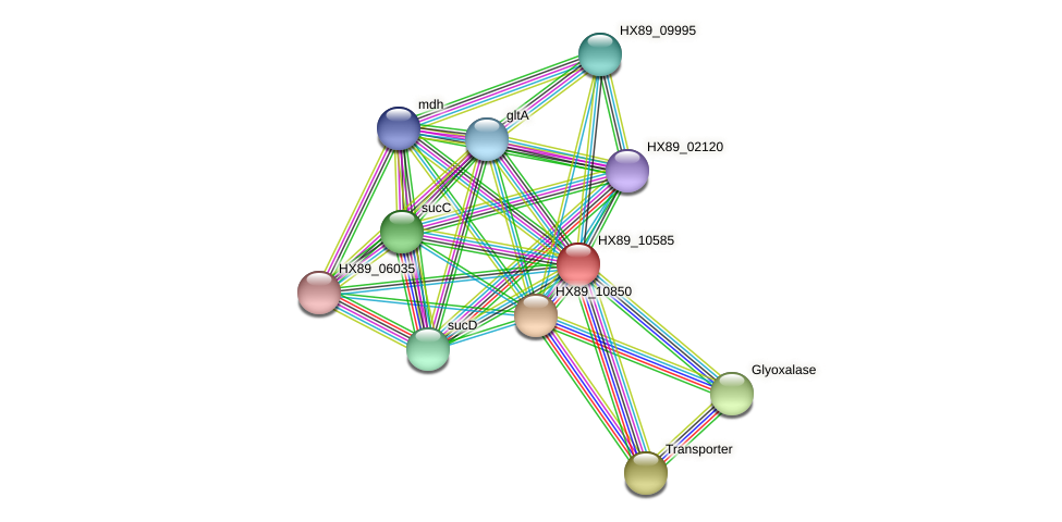 HX89_10585 protein (Dermacoccus nishinomiyaensis) - STRING interaction network