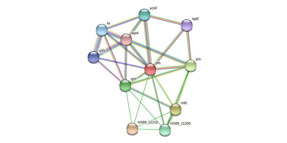 pth protein (Dermacoccus nishinomiyaensis) - STRING interaction network