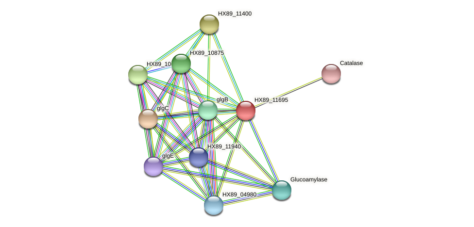 HX89_11695 protein (Dermacoccus nishinomiyaensis) - STRING interaction network